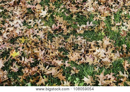 Background Of Leaves On The Grass
