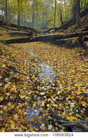 Stream Covered With Leaves In Autumn.