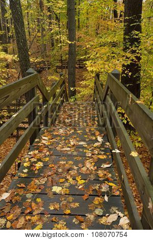 Boardwalk in forest.