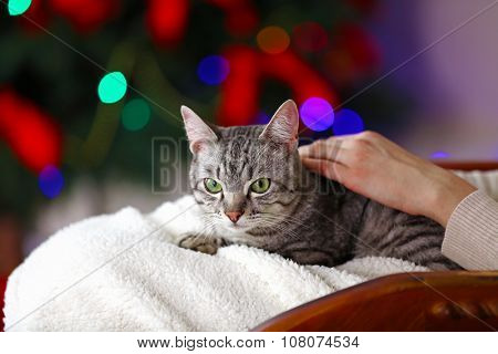 Beautiful cat on Christmas tree background