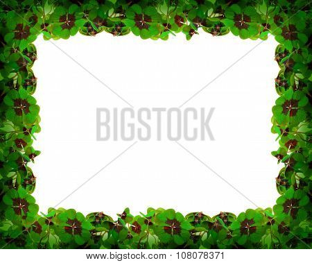 Green clover leafs frame .