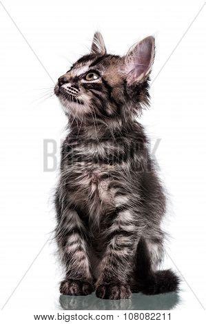 Cute Furry Kitten Looking Up
