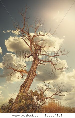 Retro Toned Lonely Withered Tree Against Sun With Flare Effect