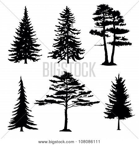 Coniferous Trees Silhouettes, Collection.