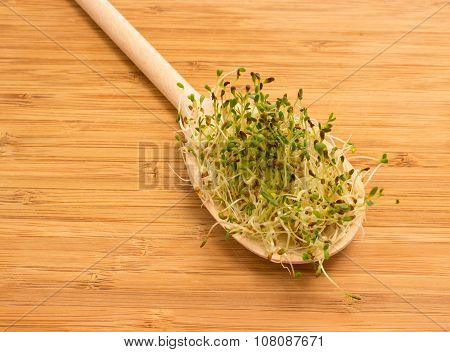 Fresh Alfalfa Sprouts On A Kitchen Board