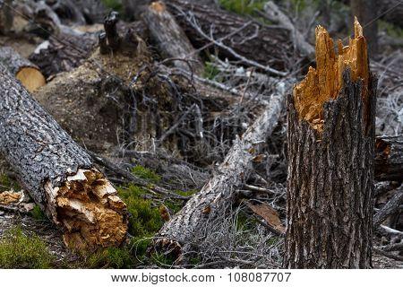 Broken Trees
