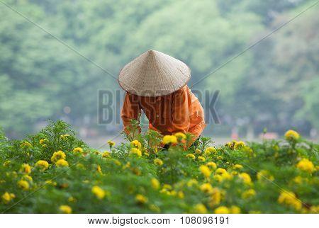 Asian gardener taking care of an yellow botany garden