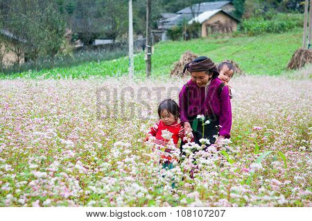 Minority ethnic old woman with children in a buckwheat flower field in Hagiang,