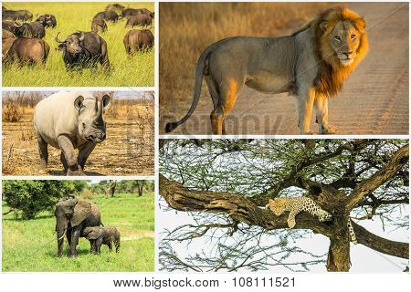 African Big Five