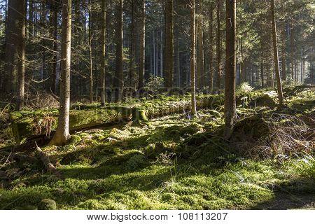 The Autumn Forest In Sumava Mountain.