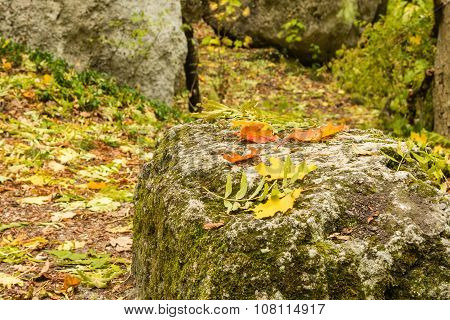 Autumn leaves on stone