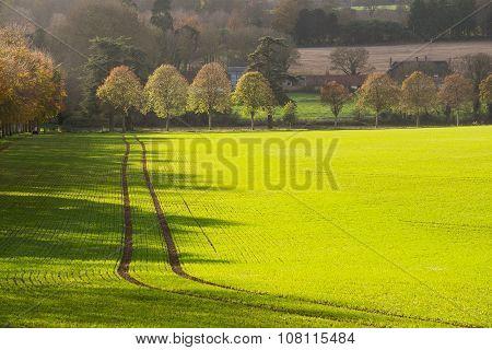 Moor Crichel Tracks