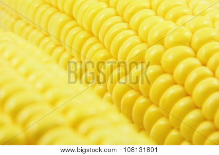 Grains of fresh corn