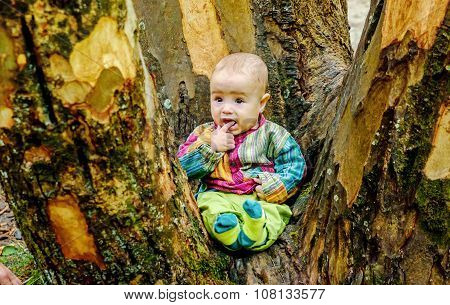 Cute Baby Boy  Sitting By The Tree In The Park
