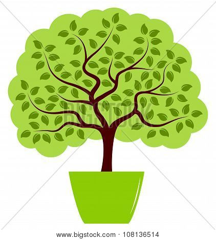 Tree In Pot