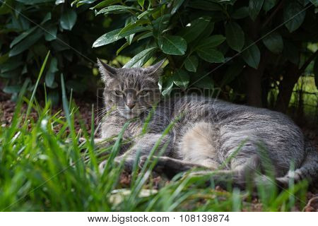 Cat Lying On Side On The Grass Looking At Camera