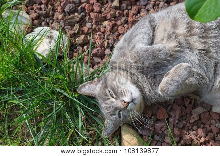 Cat Lying On The Grass With Bent Paws