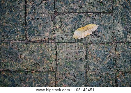 Moss and a leaf on Laterite brick