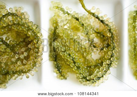 Seaweed Salad Isolated On White Background. Oval Sea Grapes Seaweed. Healthy Food.