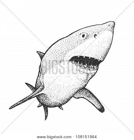 White Shark Engraving Illustration