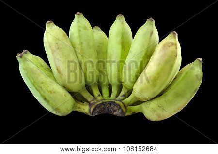 Cultivate Green Banana Isolate Black Background