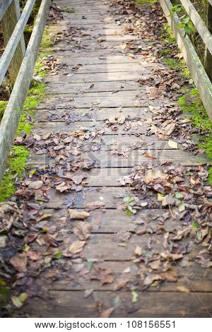Bridge With Autumn Leaves And Moss