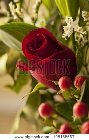 Red Rose Means Love