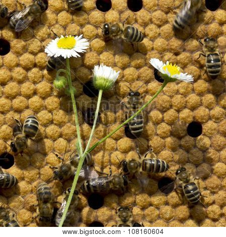 Bee Still Life