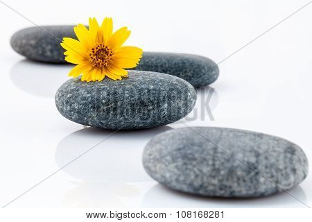 The Wild Flower On River Stones Spa Treatment Scene Isolate On White Background Zen Like Concepts.