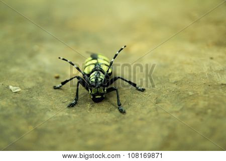 close-up of a black and yellow beetle