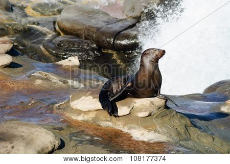 Sea Lion Shower
