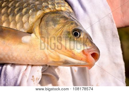 Fish Catched by a Fisherman