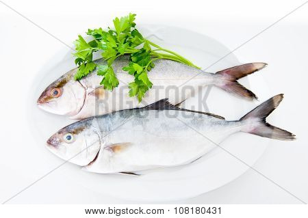 Couple Of Amberjack Fresh Fishes On White Plate