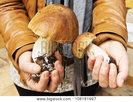 Boletus mushrooms in hands of woman