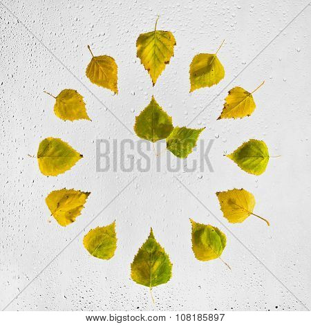 Clock stacked with colorful autumn birch leaves on the wet glass.  Two o'clock.