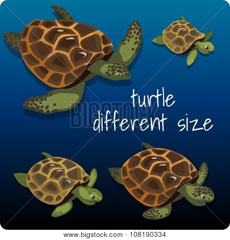 Four turtles with space for text