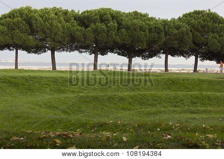 Trees Along Passeio Das Tagides