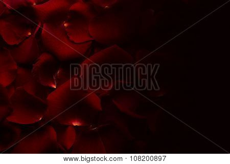 Petals of red rose