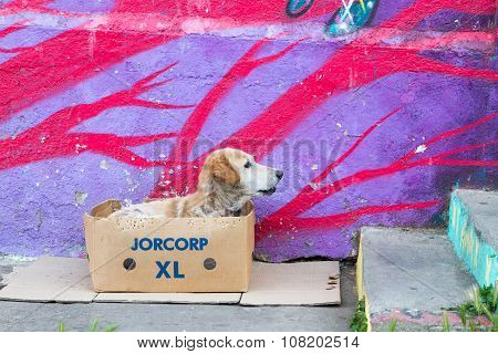 VALPARAISO - NOVEMBER 07: Dog in front of street art wall in Alegre districts of the protected UNESCO World Heritage Site of Valparaiso on November 7 2015 in Valparaiso Chile