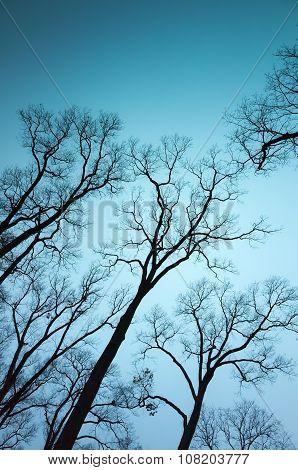 Leafless Bare Trees Over Dark Blue Sky Background