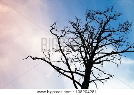 Black Leafless Tree Photo Over Colorful Evening Sky
