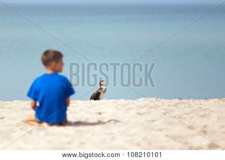 Cormorant At The Beach
