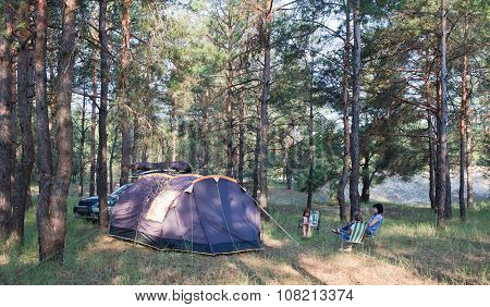 Camping At Pine Forest