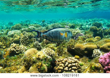 Big Beautiful Fish