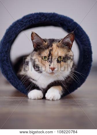 Portrait Of A Cat Of A Multi-colored Color.