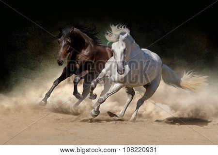 Horses run in dust