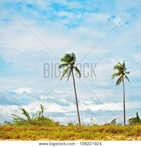 Two Green Palms