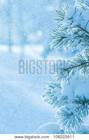 Background with snow-covered tree