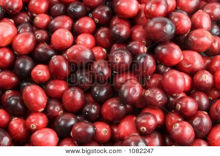 Cranberry Background