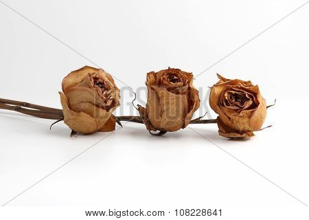 Three Dried Roses On White Background